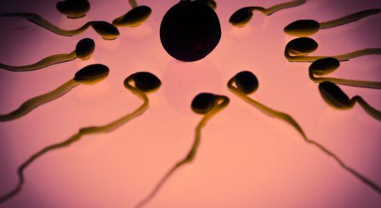 Æg møder sædcelle