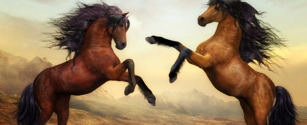 Brune heste