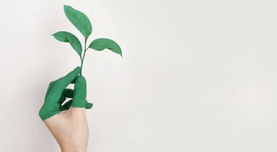 Klima & bæredygtighed er betydningsfuldt for mange