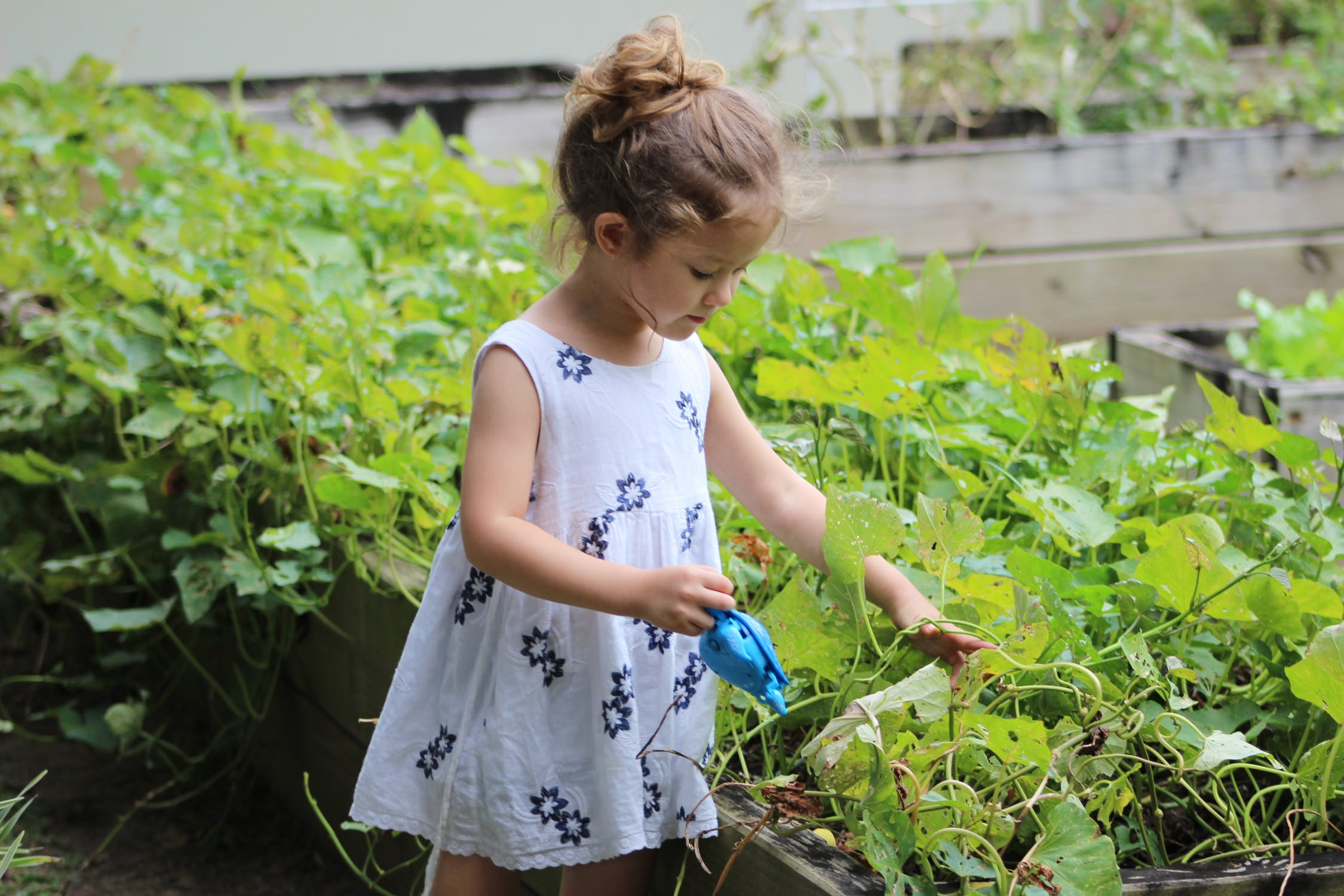 lille pige som vander blomster