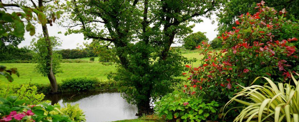 have fyldt med grønne buske og træer
