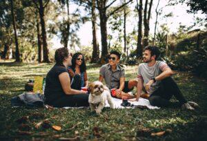 hund-i-skov