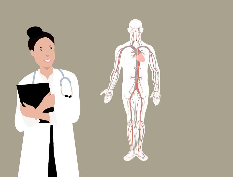 illustration af laege og menneskekrop